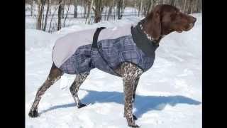 Купить дешевую одежду для собак