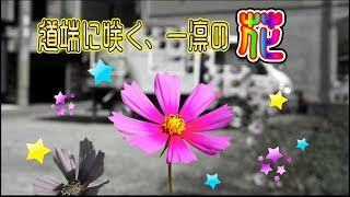 イメージ動画 力強く道端に咲く一凛の花のように少しづつ色づいて行きたい!  動画サムネイル