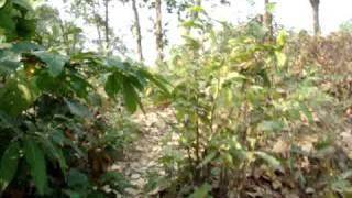 Climbing Garo Pahar at Birishiri, Netrokona
