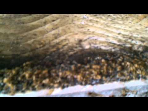 The sickest most infested Bed Bug job in Syracuse NY