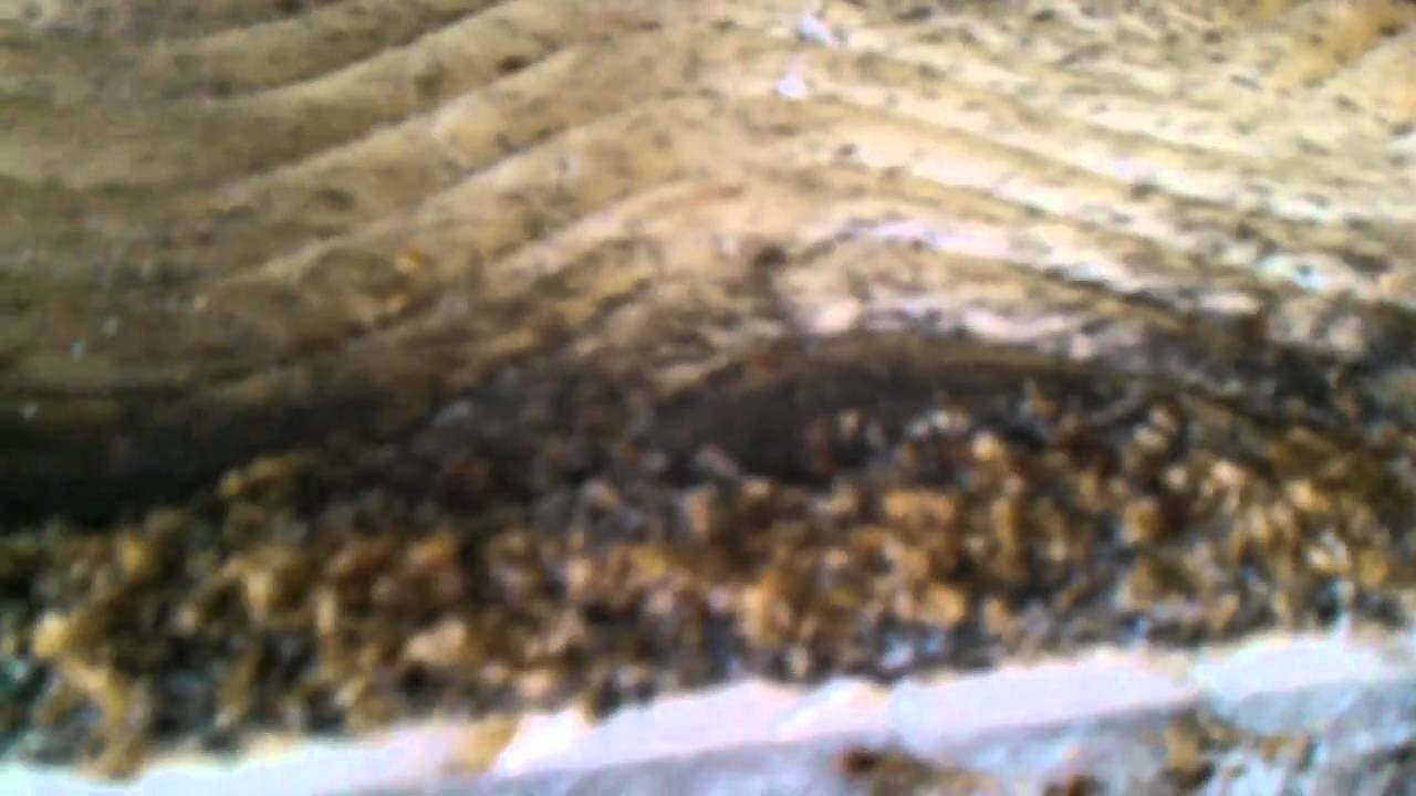 The Sickest Most Infested Bed Bug Job In Syracuse Ny Youtube