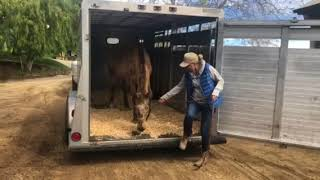 Honey Palouse unloading at her new home