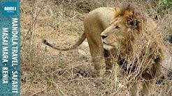 Kenian safari - Masai Mara | Mandala Travel