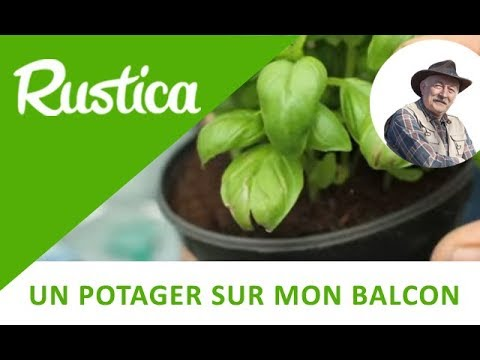 comment semer du basilic en pot how to plant basil in doovi. Black Bedroom Furniture Sets. Home Design Ideas