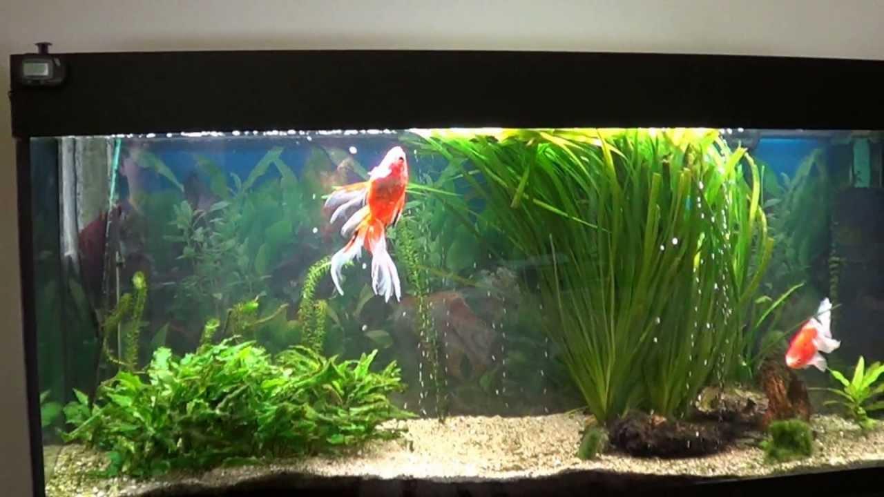 Berühmt Mon aquarium Juwel rio 240 - YouTube WI94
