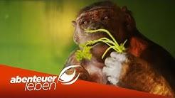Der letzte Affe im deutschen Zirkus: Robbys Leben als Zirkus-Affe | Abenteuer Leben | kabel eins
