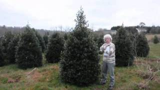 HHF Video Canadian Hemlock  Trees