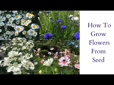 Sowing Seeds | How To Sow Flower Seeds | Seed Sowing