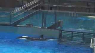 SeaWorld Trainers Swim False Bottom Floor Sept 6 2014 - 1 of 2 - SWC