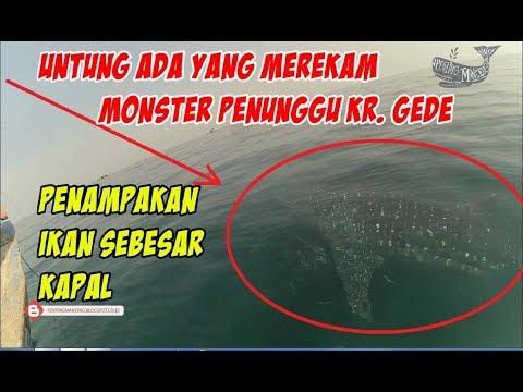 MERINDIING!!! DETIK-DETIK PENAMPAKAN MONSTER PENUNGGU KARANG GEDE