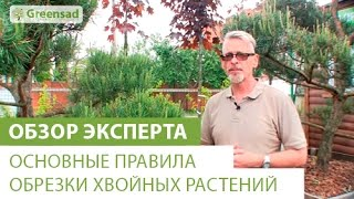 Как правильно обрезать хвойные растения(, 2014-05-23T09:21:44.000Z)