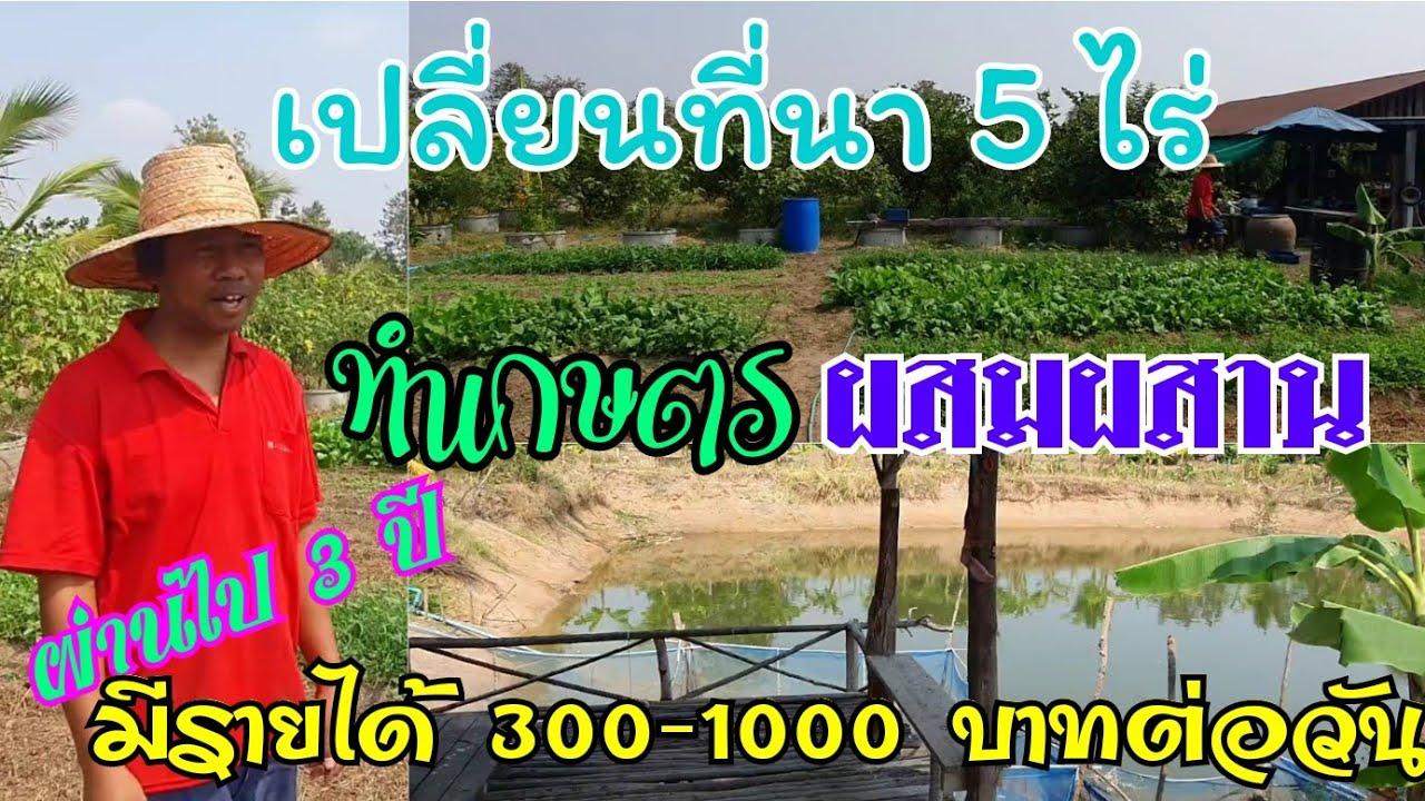 เปลี่ยนพื้นที่นา 5 ไร่มาทำเกษตรผสมผสาน 3 ปีผ่านไปมีรายได้ 300 - 1000 บาทต่อวัน
