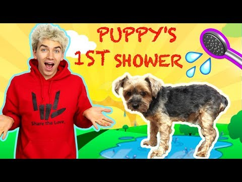 PUPPYS FIRST BATH WITH STEPHEN SHARER & LIZZY SHARER CUTEST PUPPY SHOWER 🐶💦