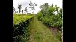Bogor Hash House Harriers Run at Selabintana,No 1819 .Sukabumi part 1
