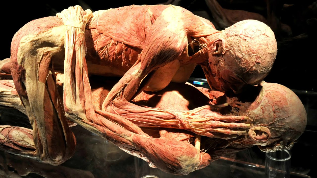 10 disgusting facts about the human body - youtube, Muscles