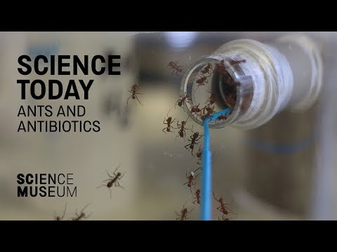 How fungus-farming ants might help us develop new antibiotics