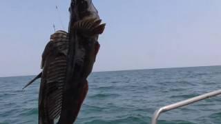 Рыбалка на Черном море . Белгород -Днестровская