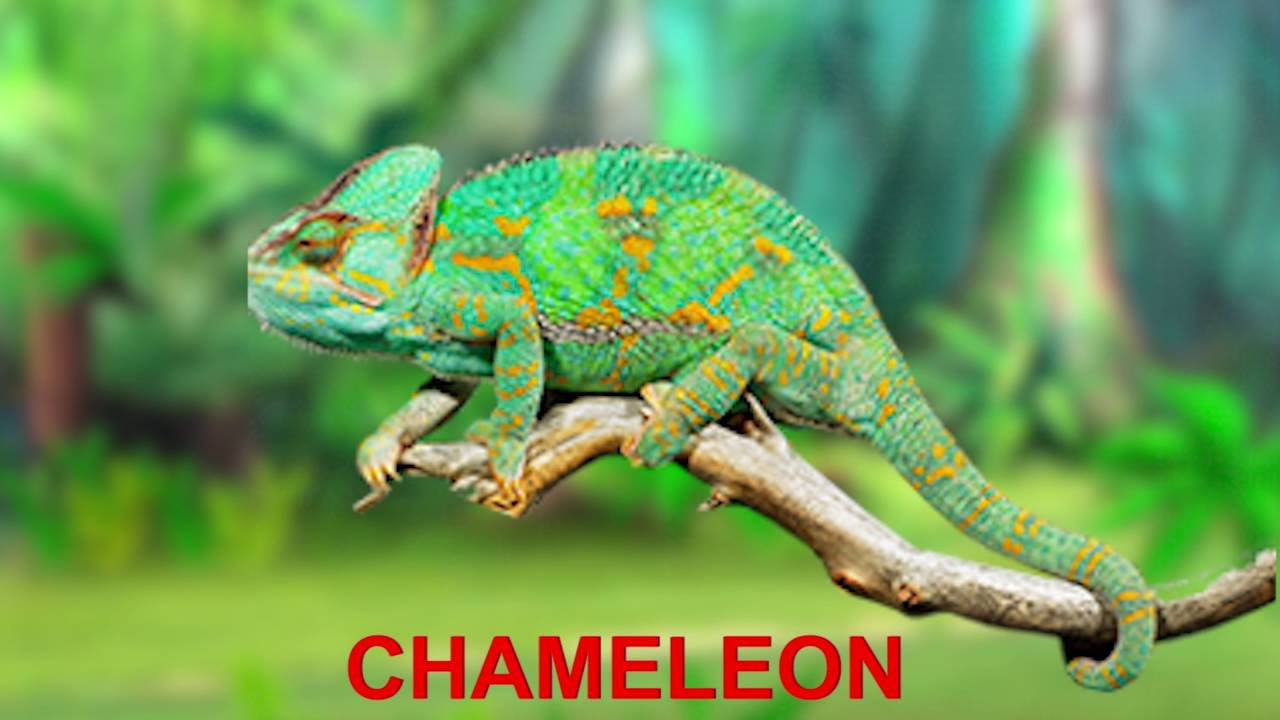 Babies From Baby Boom Finger Family Nursery Rhymes Reptiles Chameleon
