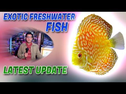 Exotic Freshwater Fish Latest Update Jamshed Asmi Informative Channel In (Urdu/Hindi) YouTube