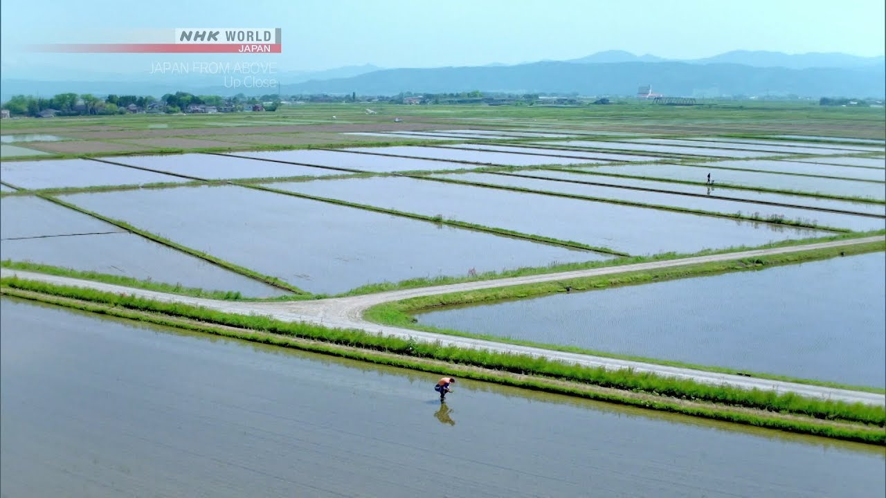 Photo of Of Rice and Men [Yamagata] – JAPAN FROM ABOVE: UP CLOSE – video
