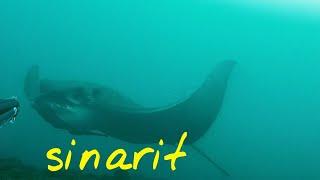Spearfishing Dentex Zıpkınla Sinarit Avı