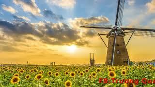 Đồi hoa mặt trời │Sáo trúc Trung Tô │Sáo A4 + D5