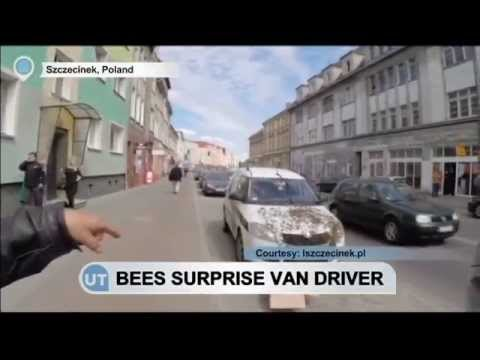 Swarm of Bees Surprises Polish Van Driver: Safety contractor found insects take over his van bonnet