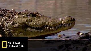 Łowili ryby w jeziorze pełnym krokodyli! [Wielka egipska wyprawa]