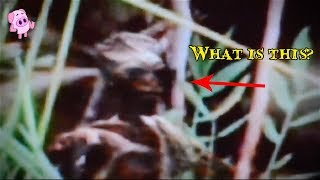 9 Terrifying Witches Caught on Camera