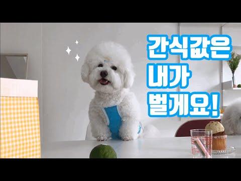 강아지 의류촬영 현장속으로!