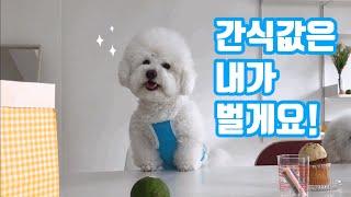 강아지 의류촬영 현장속…