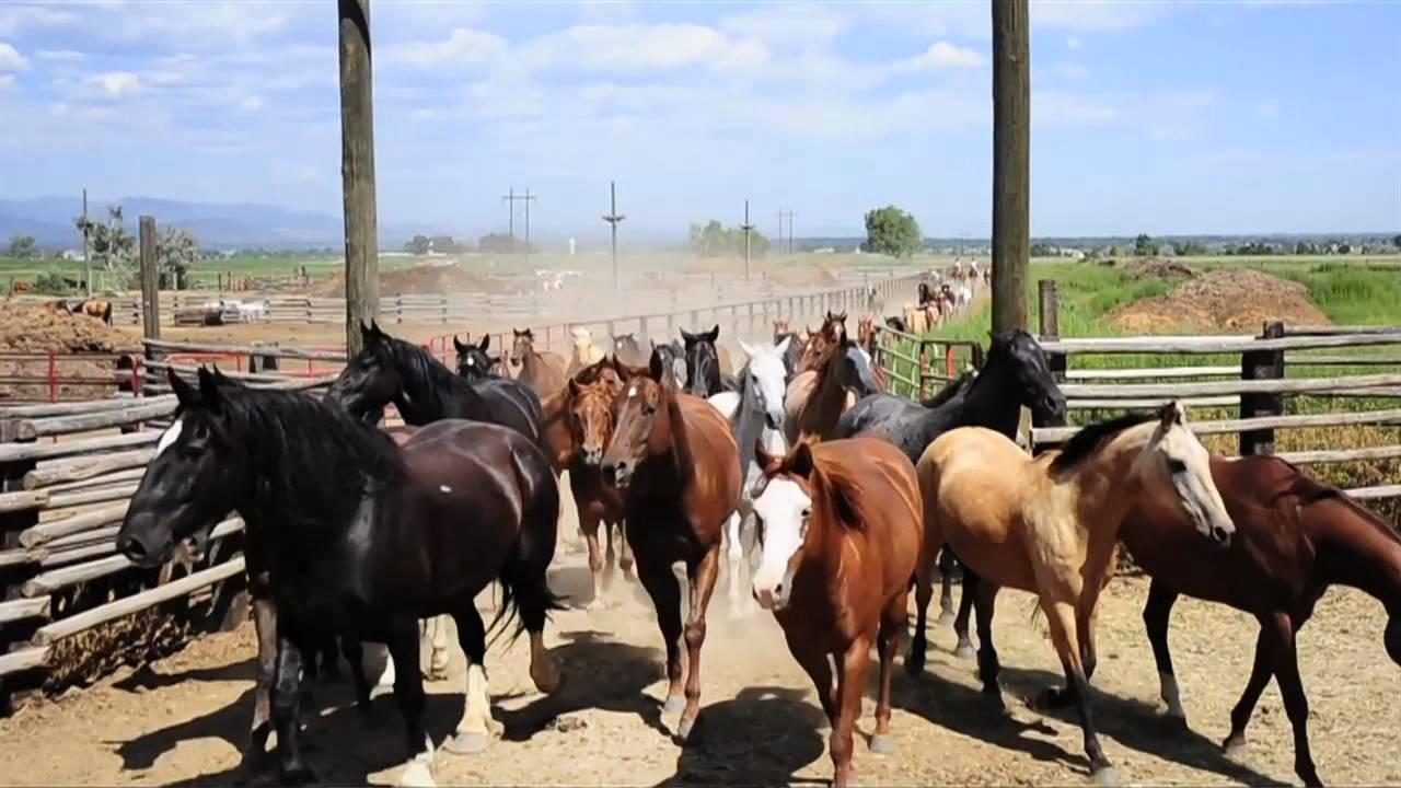 Cowboys And Aliens Horse Wrangler Mark Bishop Youtube