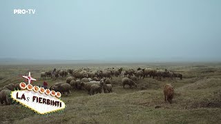 Las Fierbinti - Ardiles, ciobanul (Episod Special de Craciun)