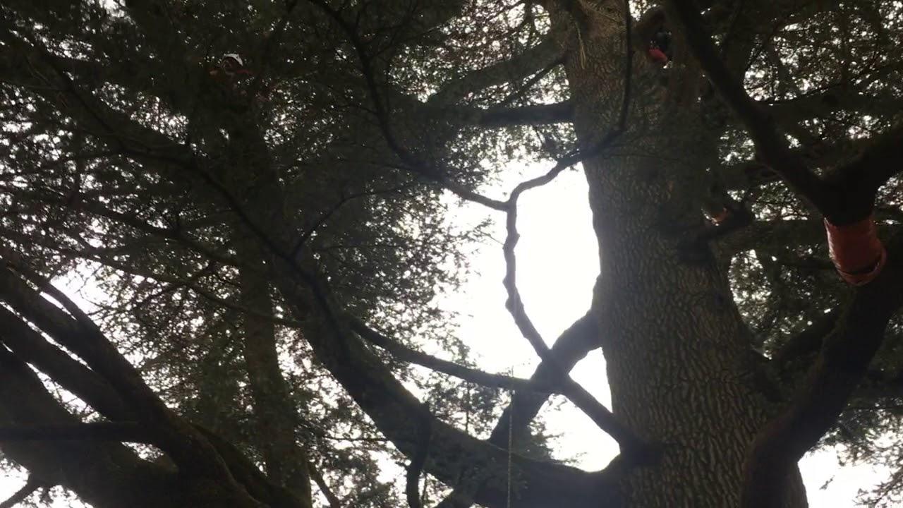 rencontre regionale d arboriculture