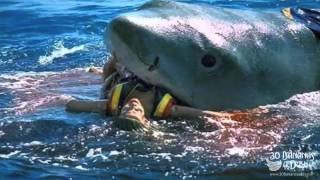 German Backpacker Shark Attack Off Australian Beach real or fake?