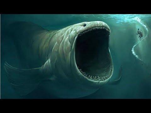 समुद्र की गहराई में पाया गया सबसे VISHAAL जीव | The Biggest Animal In The Ocean Depth