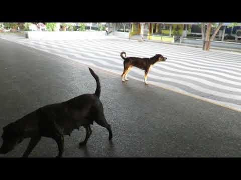 the-dogs-of-the-san-pablo-parish