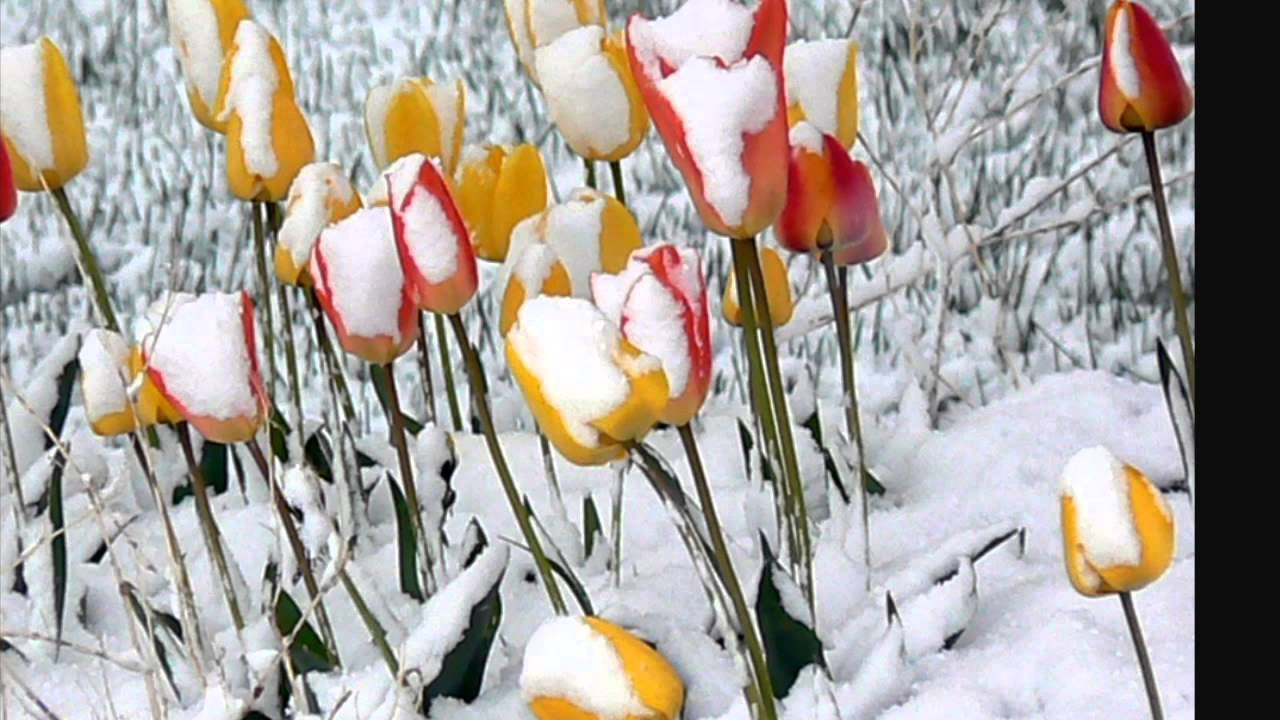 Snow On Spring Flowers Youtube