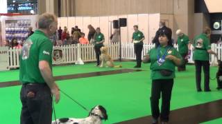 Kennel Club Good Citizen Dog Scheme Bronze Display - Crufts 2014