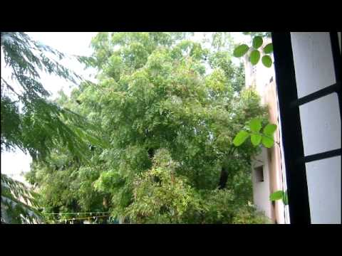 NEEM - The Divine Tree