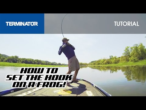 Setting The Hook On A Hollow Bodied Frog