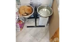 Видео/фото котят мейн-кун (др - 7.01.19)