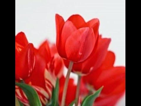 Cara Membuat Bunga Tulip Dari Sedotan (Kerajinan Tangan Dari Barang Bekas)  - YouTube a78fdad41e