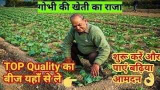 गोभी की खेती कर पाएं लाखो की आमदन | इस किसान ने कर दिखाया सच | बढ़िया बीज किया तैयार