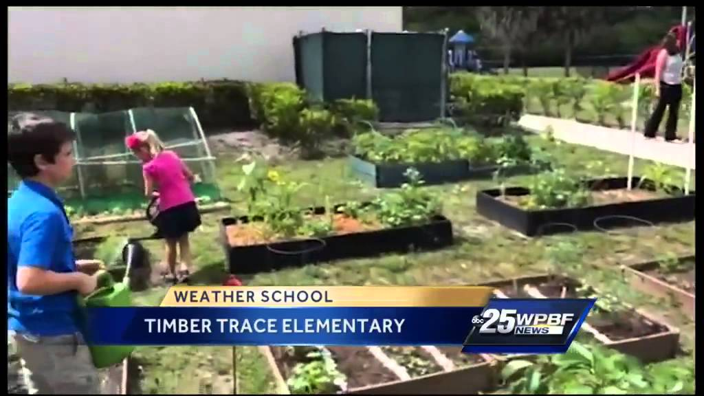 Cris\' Weather School: Timber Trace Elementary - YouTube