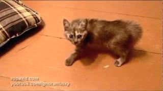 Brave Kitty (Храбрый Котенок)