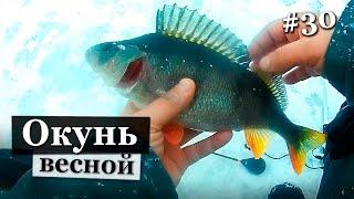 Где же весенние лапти. Ловля окуня на реке Свирь. Зимняя рыбалка 2017.