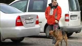 Собаки помогают в поиске пропавших детей
