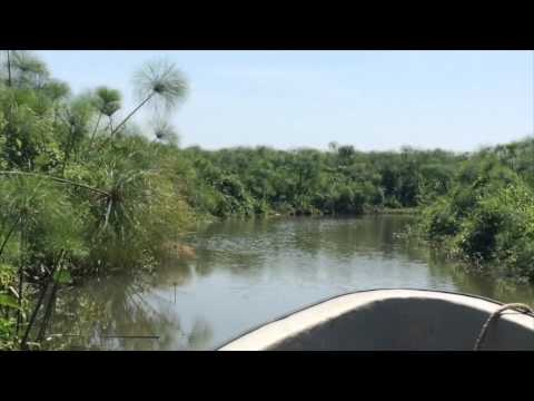 Watching for crocodiles on the White Nile in South Sudan