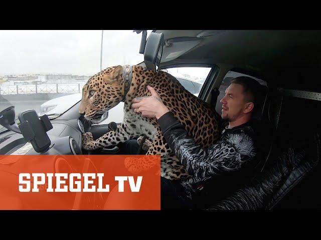 Der russische Tiger King: Kuscheln mit Raubkatzen